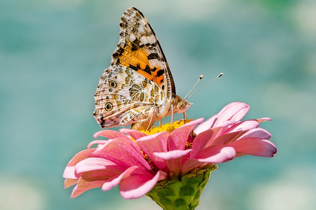 Butterfly on pink flower. Desert Landscapes.