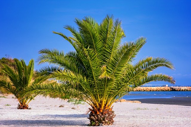 Pineapple palm trees on the beach